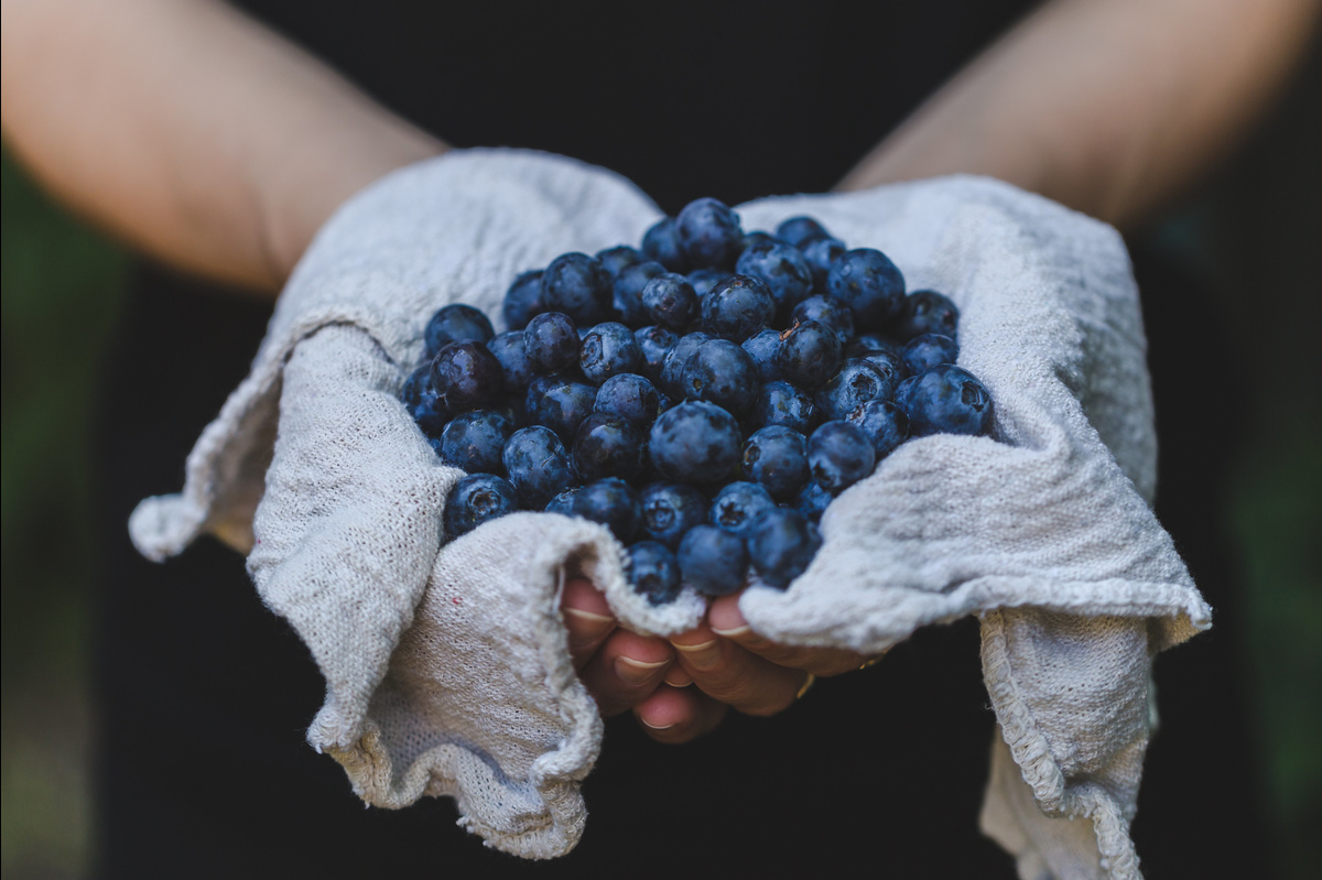 blueberries-in-hand_4460x4460.jpg